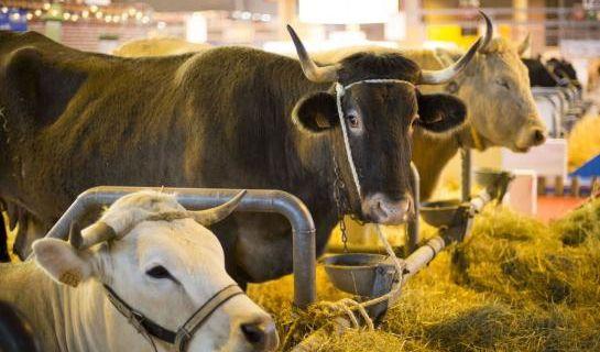 Salon de l'agriculture : la manif de la fondation Bardot interdite