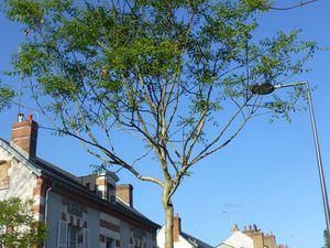 rue de Patay, vers le carrefour avec la rue de Lahire, plusieurs arbres sont identifiables grâce à un petit panneau