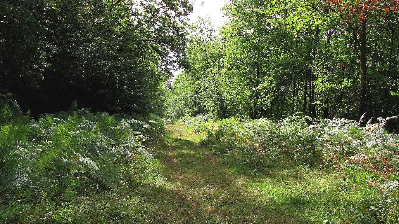 carrefour_Route du Grand Octogone_Route des Beaux Monts