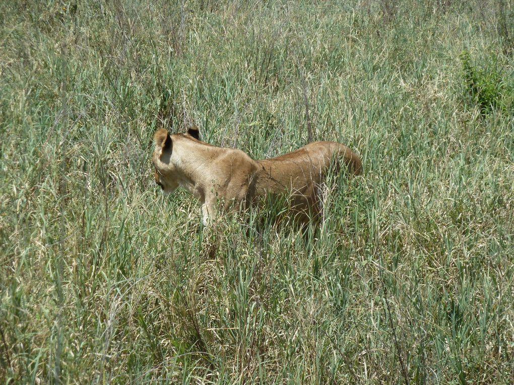 Tanzanie - Le parc National de Tarangire - Manyara.