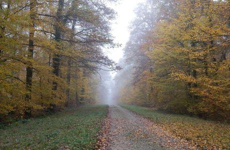 En forêt de Blois, or dans le brouillard