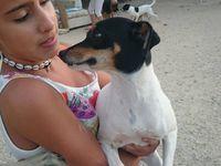 Sabrina Bodeguera de 3 ans à l'adoption chez sos chiens galgos