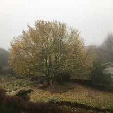 Dans le brouillard.....