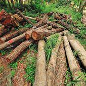 Comment la déforestation et les problèmes de l'industrie du bois peuvent être combattus par la blockchain