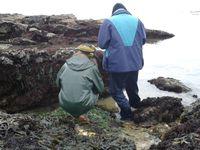 Et pour finir un Citron de mer (limace) et à droite une Orange de mer (éponge) qu'observent Gyslaine et Pierre