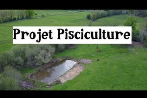 Élevage de Poissons (Pisciculture)