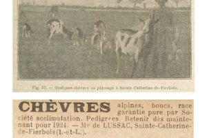 LUSSAC (marquis de) Maximilien (1879-1944) éleveur de chèvres en Indre-et-Loire (Comacre à Sainte-Catherine-de-Fierbois)
