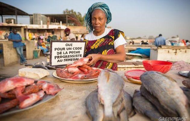 Razzia chinoise dans les zones de pêche africaines