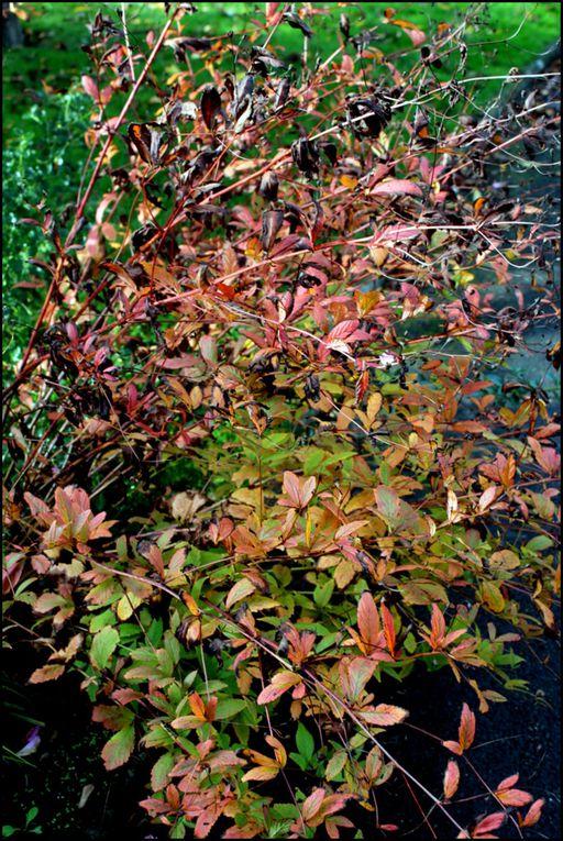 Couleurs d'automne,