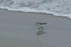 Sortie ornithologique du dimanche 24 mars 2013