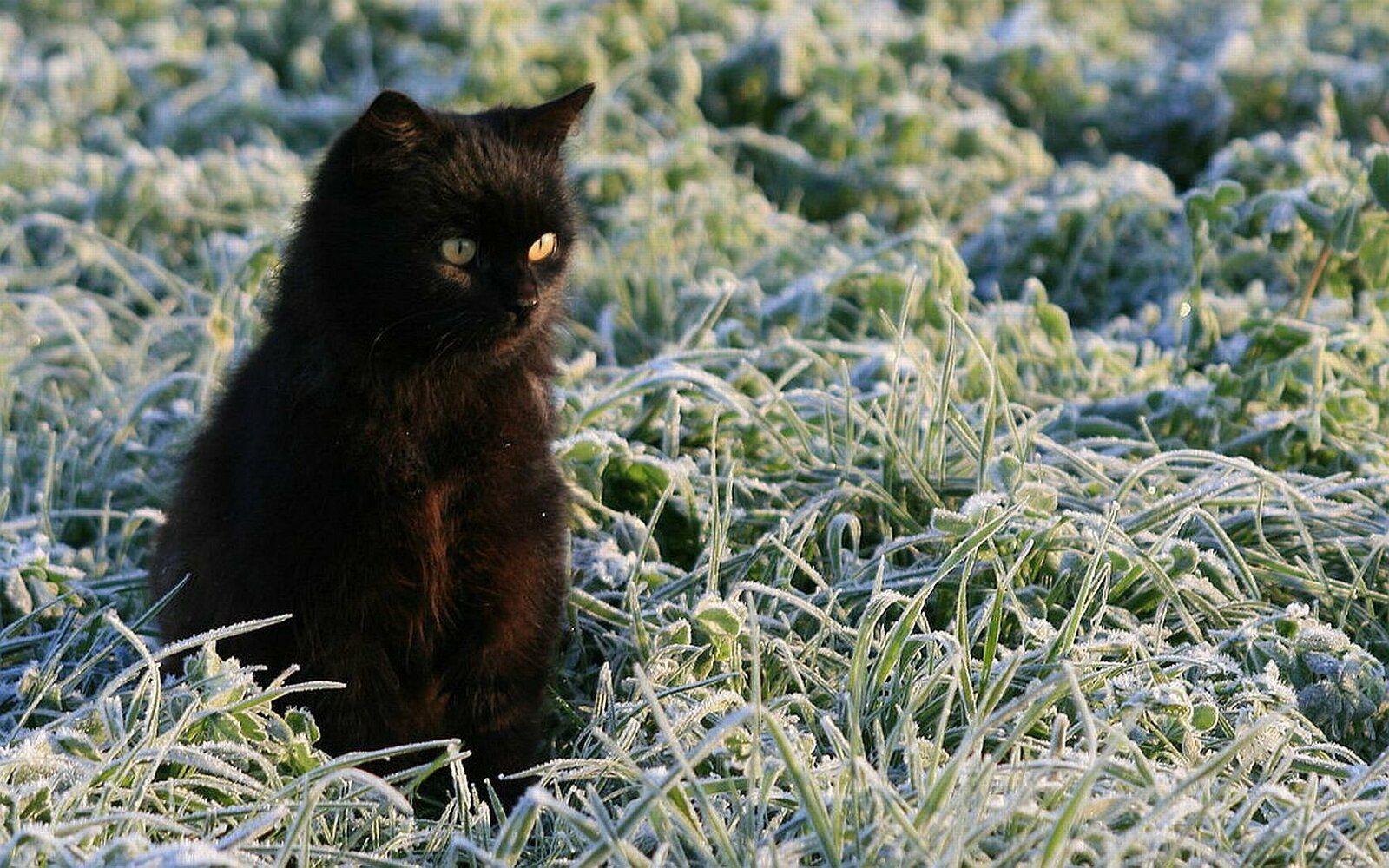 Comment prendre soin de son chat en hiver ?