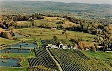 #White Cayuga Producers New York Vineyards