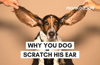 When your dog shakes head to one side or scratch, Do This!