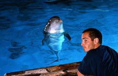 C'est pour toujours que les dauphins aiment