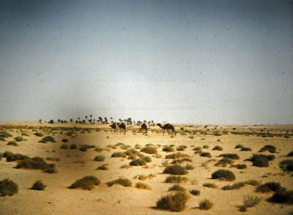 de Ouagadougou à Jarnac 2ème partie