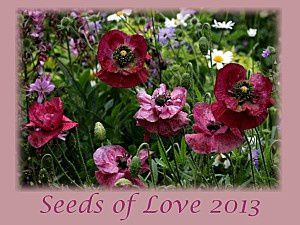 Seeds of love 2013 (and the winners)
