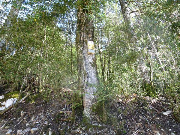 Ne pas manquer le petit panneau sur l'arbre ...