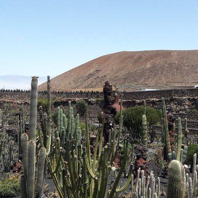 Iles Canaries : Lanzarote !