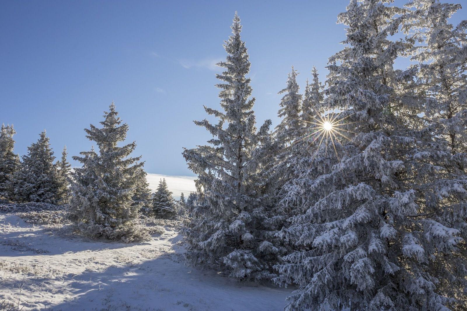 Trottiner sur la neige