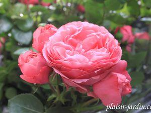 b9. Les rosiers en L. de Le à Lg