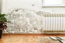 Mildew Vs. Mold: Know The Difference Before Stating To Clean!