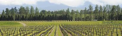 The Wairarapa region and vineyard