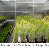 GREENHOUSE MANUFACTURERS IN INDIA CAN HELP YOU IN QUALITY FARMING - Saveer Biotech Blog