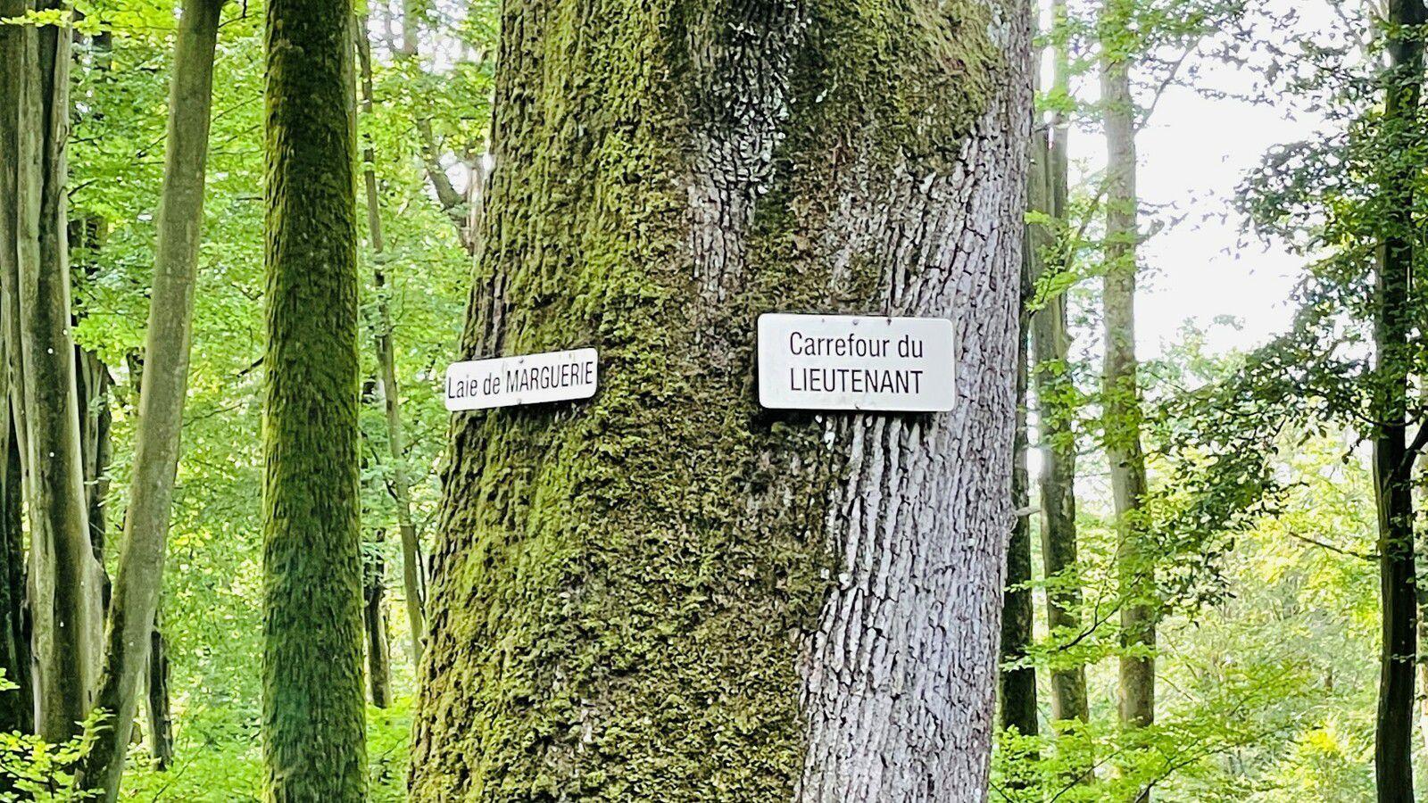 en forêt de Retz_88_08_2021_autour du Regard Saint-Hubert et du Rond de la Reine