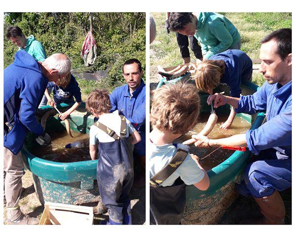 Opération cornes de bouse à la ferme du Marais Champs