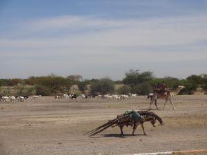 Les sites exceptionnels du désert de l'Ennedi avec ses peintures rupestres et la transhumance des nomades