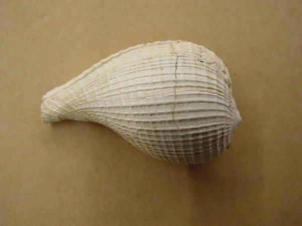 <p>Faune fossile de République tchèque</p> <p>Une sélection, parmi notre collection, des pièces tchèques les plus intéressantes.</p> <p>Bonne visite !</p> <p>Phil « Fossil »</p>