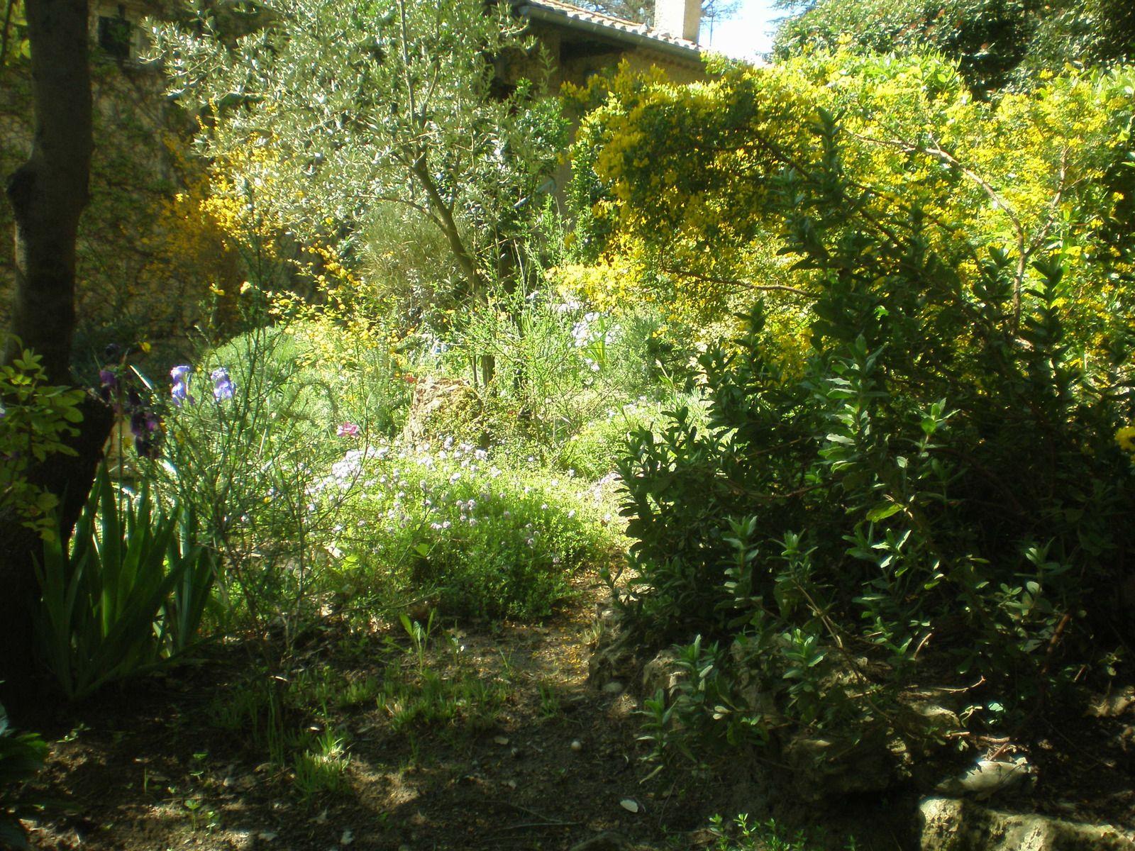 Deux vues partielles du jardin.