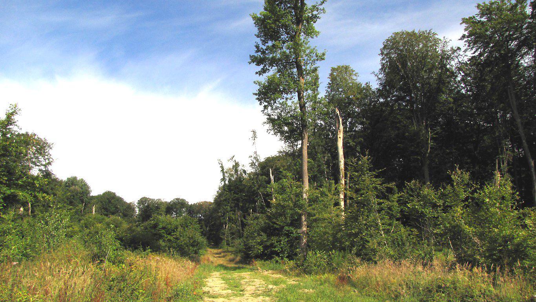 le carrefour du Margenois