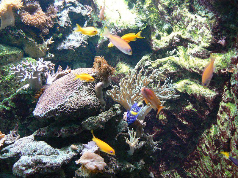 Aquarium de la Porte Dorée, Paris 12e, deuxième partie