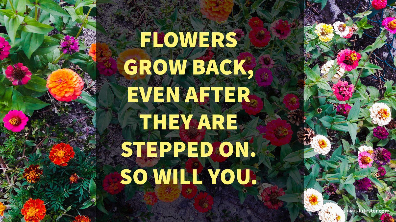 ... 2 minutes de citations sur le Pouvoir des Fleurs