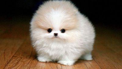 Apprener vos chiens des bonnes habitudes ils sont tous mignons sur le blog de www.mariequivivre.com