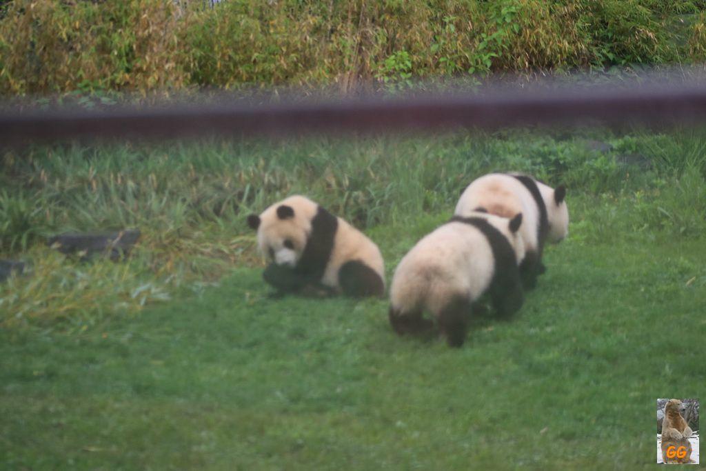 Besuch Zoo Berlin 09.05.+13.05.21