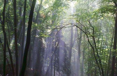 Etat de nos forêts helvétiques