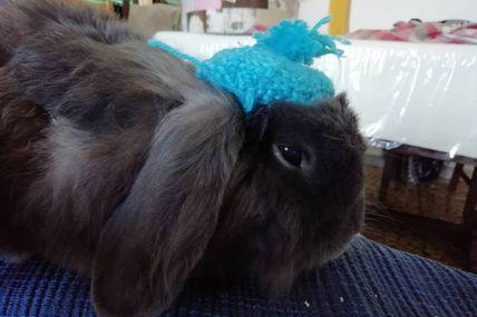 Intervista a Poldo Coniglio