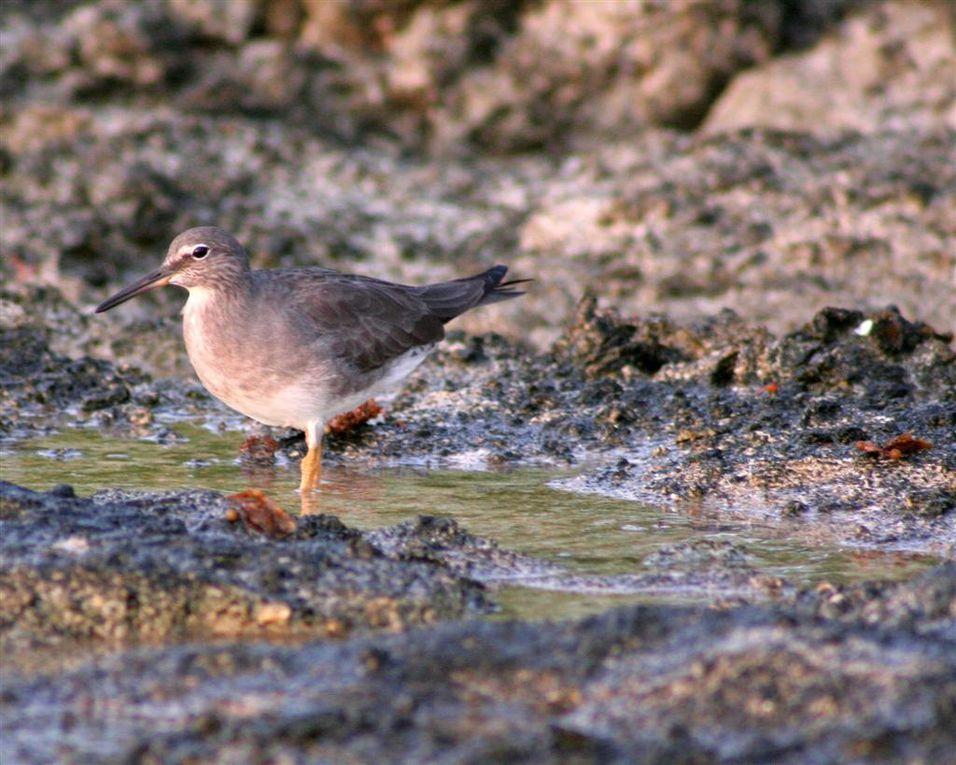 Album - oiseaux-de-Polynesie