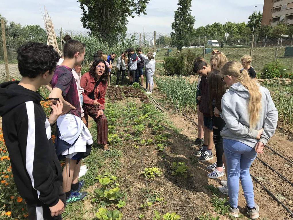 SMSP19 Environment Social Garden