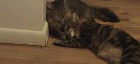 Deux chats handicapés : une belle émotion.