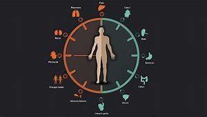 La chronobiologie où le respect de l'horloge interne. Partie 3/3