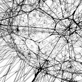 Galaxies Forming along Filaments, like Droplets along the Strands of a Spider's Web · STUDIO TOMÁS SARACENO