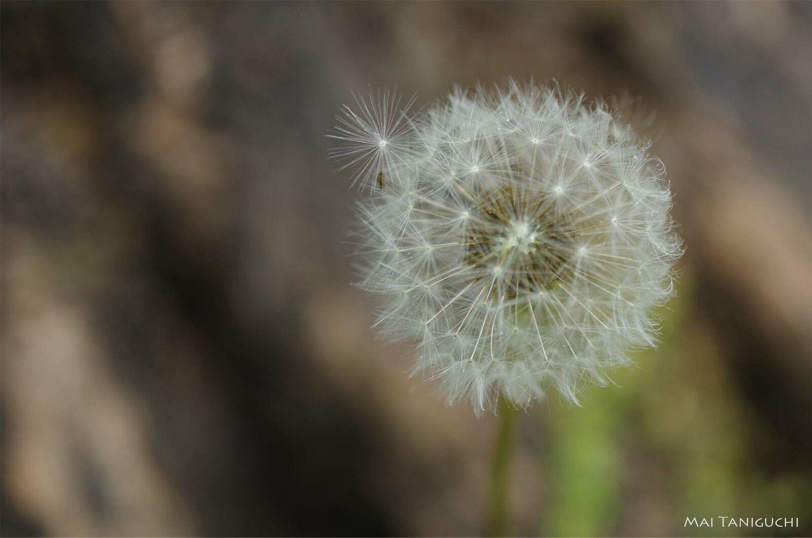 Fleurs des herbes