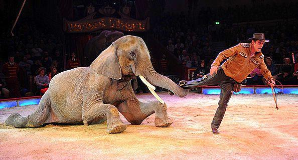 29° Fête Lilloise du Cirque, spectacle où les animaux sont de véritables vedettes