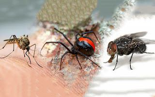 Understand Why Environmental Friendly Pest Control Are More Effective And Long-lasting
