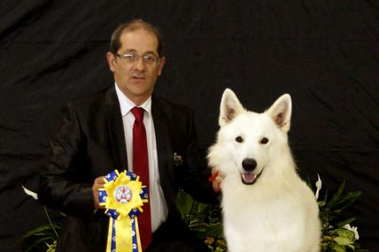 Lord of World du domaine charlesien (berger blanc suisse)