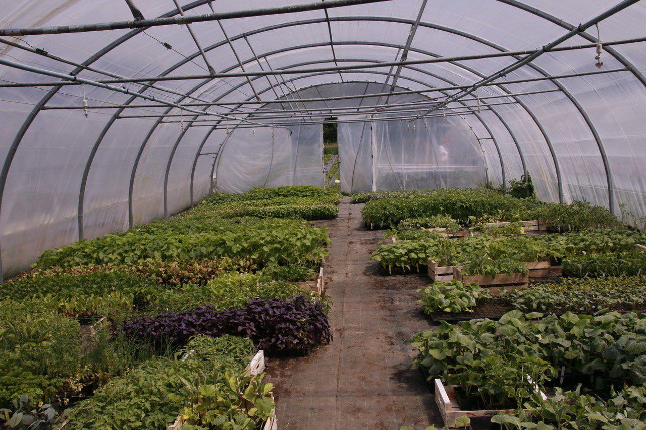 Reprise de la distribution des paniers de légumes bio !