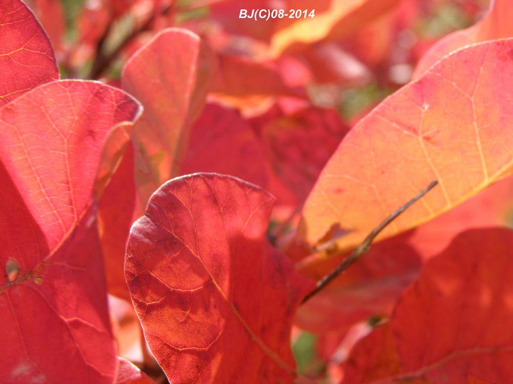 contrastes du flamboiement de la végétation et des austères schistes gris des ROBINES